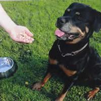 Perustaidot koirallesi -kurssi